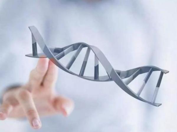 美国试管婴儿胚胎的ABCD等级如何分类?